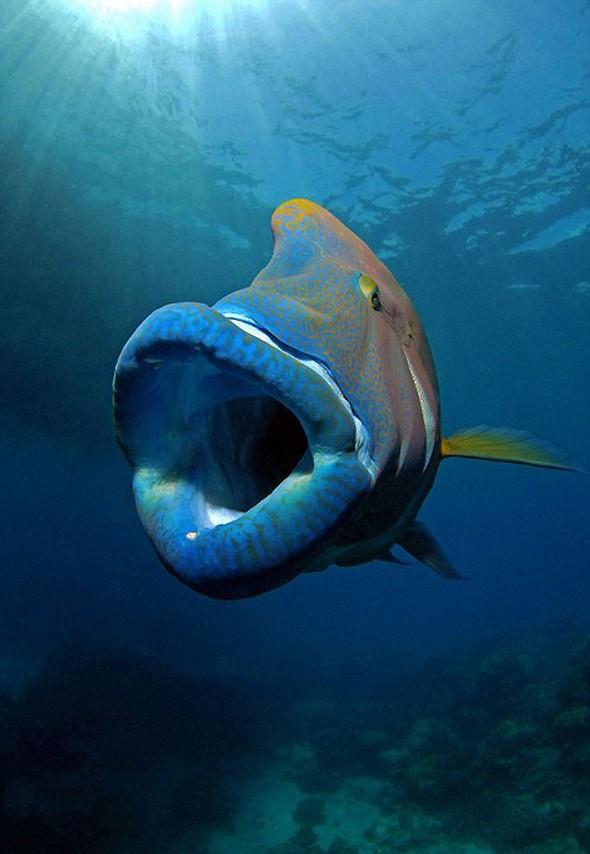 130 kiloluk balığa yem oldu... galerisi resim 3