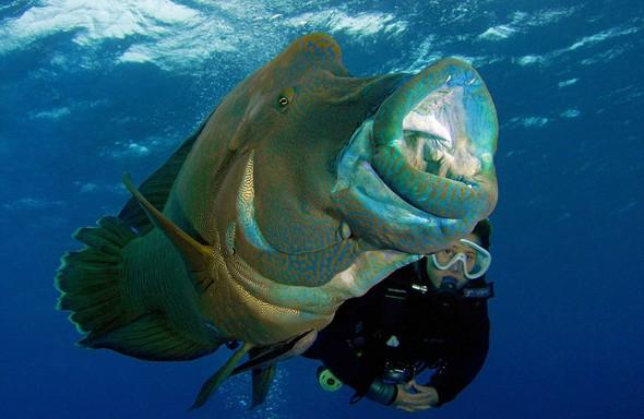 130 kiloluk balığa yem oldu... galerisi resim 4