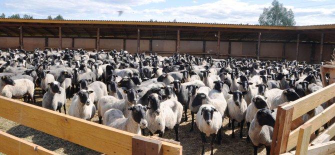 Rusya'dan et ithalatı için çalışmalar başladı