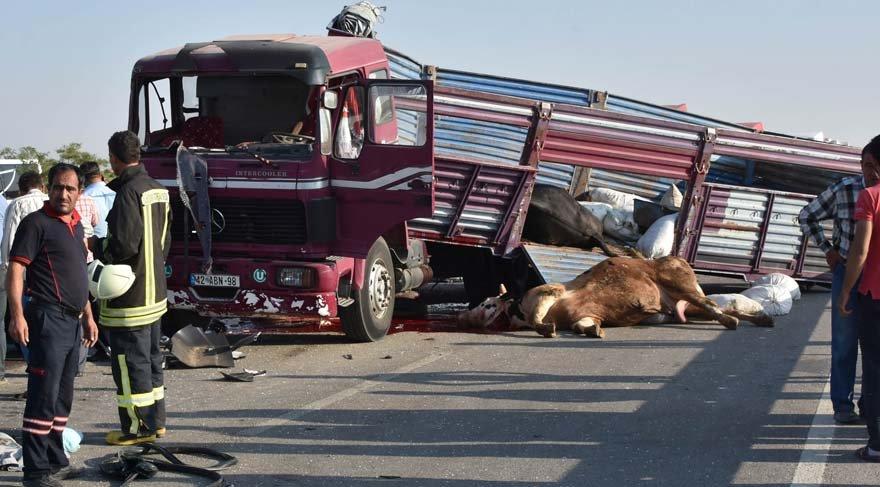 Kurbanlık taşıyan kamyon yolcu otobüsüne çarptı
