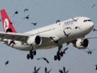 3. havalimanında martı tehlikesi ortadan kalkıyor