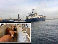 Türkiye, iki gemiyi limanlarına kabul etmedi