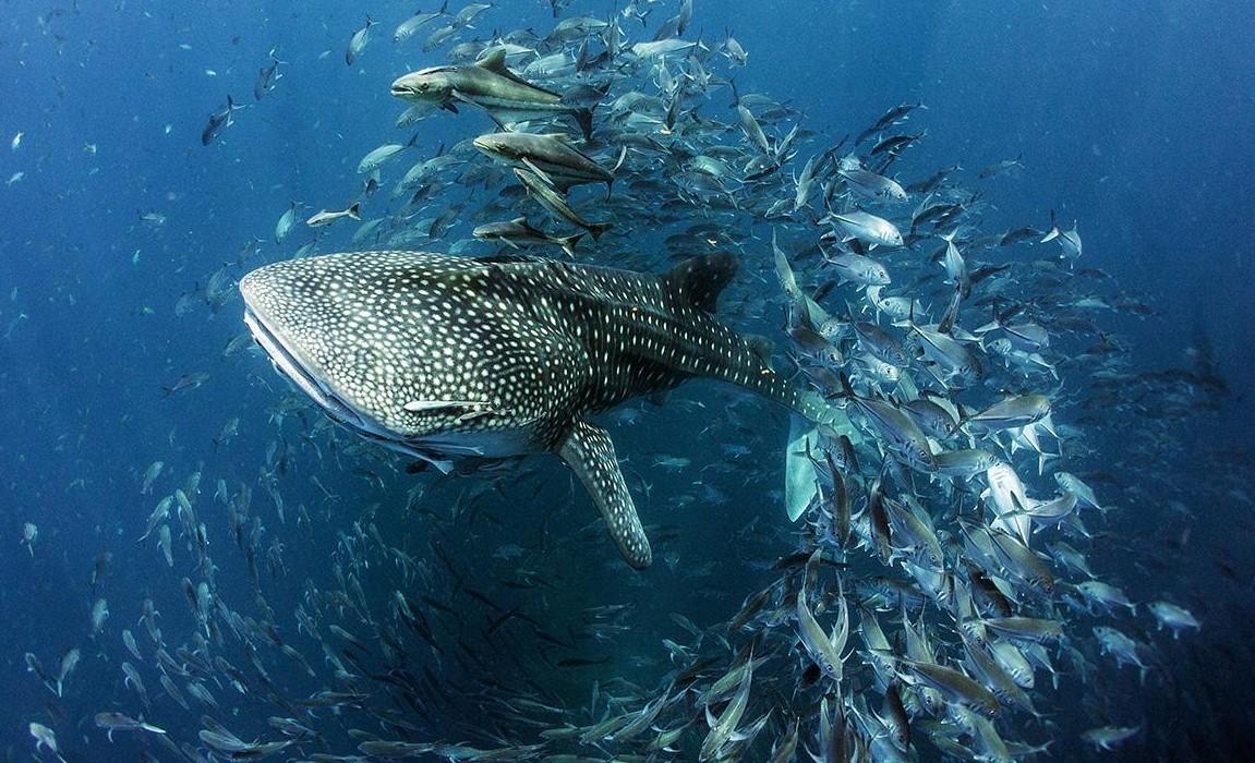 dunya-okyanus-gunu3-003.jpg